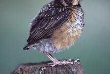 birds / by Sherrie Petersen