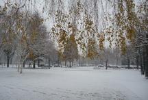 Snowy Alsace
