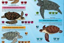 tortues marines terrestres