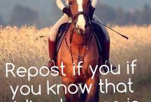 Horse life / Love horse