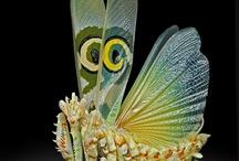 insekts