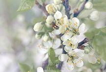 Spring/Kevät