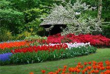Kwiaty / Najpiękniejsze kompozycje kwiatowe