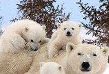 αρκουδες