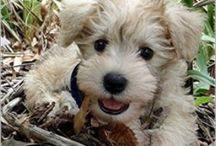 Pets / Lots of cute fluffy animals that u will LOVE xox