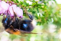 Bumble Bee Control