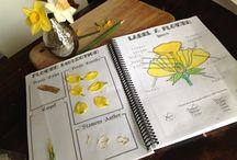 activités botanique zoologie pour enfants / botanisme zoologie, affiches scolaires, jardinage