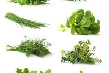 If it grows is it a herb?