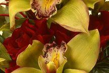 Alan Dunn flowers