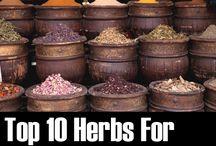 Herbs / by Nancy Gibson
