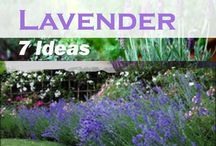 Plants and Flowers / Ideas for what types of plants and flowers to use in various landscaping layouts.