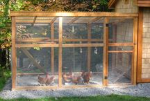 Chicken Coops and ideas