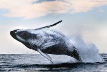 Ocean Creatures / Magical creatures of the Ocean / by Lesley McDermid