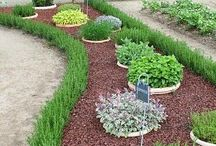 Outdoor/landscaping ideas