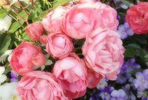 roses / .
