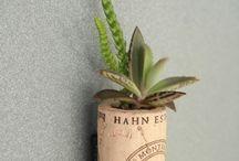 mantar succulent