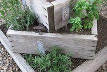 Zahrada - bylinky