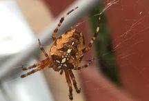 Hämähäkit