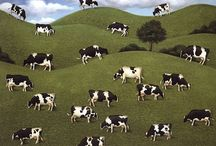 Everything cows!!