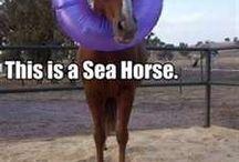 really REALLY funny sayings (animals)