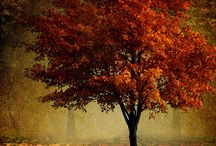 Fall : Beauty