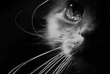 állat fotó