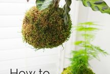 Kokedama and plants