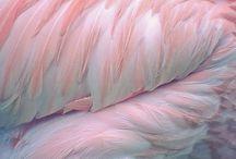 Colours- Pink- Rózsaszín