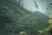 fantasy: forests