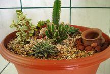 jardines y cactus