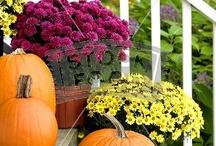 Autumn + Thanksgiving / decor: autumn + fall + halloween + thanksgiving / by Becky F