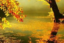 Gorgeous Gold / Beautiful golden autumn scenes, sunrises and sunsets, and other radiant golden colors.