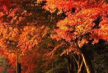 Szépséges ősz / Nekem a legszebb
