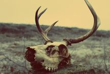 Schönheit im Tode