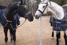 I miss horses. I should change that
