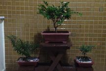 Jardineira para Bonsai!