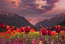 Kukkia kedolla