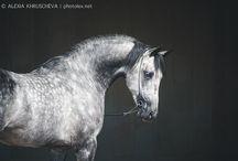 Horses... Horses everywhere...