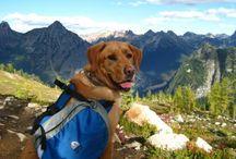 Adventurous Dogs