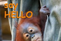 """Hello My World!"" Save the orangutans! / Children from 34 countries join together to say ""Hello My World!"" ""Hello My World!"" is an international social and educational campaign initiated by the Helen Doron Educational Group to mark the 30th anniversary of Helen Doron English."