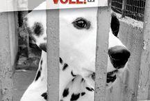 """Kampagne """"Wir haben die Schnauze voll!"""" / Kampagne """"Wir haben die Schnauze voll!""""  KONSUMGUT HUND - ANGESCHAFFT. ABGESCHAFFT. AUSGESETZT. UMGETAUSCHT. ERSETZT. ERMORDET...  Sensibilisierungskampagne in Zusammenarbeit mit der Pit Dogs Nothilfe und purpur-mediengestaltung.ch.  Manchmal sitzt er zu deinen Füssen und schaut dich an, mit einem Blick so schmeichelnd und zart, dass man überrascht ist über die Tiefe seines Ausdrucks.  Wer kann nur glauben, dass hinter solchen strahlenden Augen keine Seele wohnt! (Théophile Gautier)"""