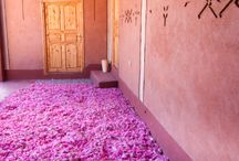 Morocco / by Ali Whit