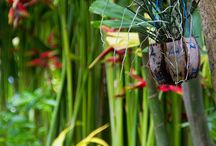 Tropical Gardens at Villa Maly