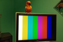 Mango / Mango is the Sun Conure Parrot who has a happy home in the office of Adventure Productions