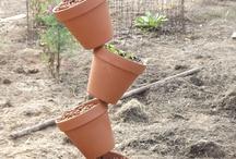 potplant ideas