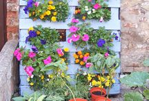 Flower - Vegetable boxes