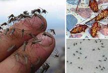 Szúnyogok ellen