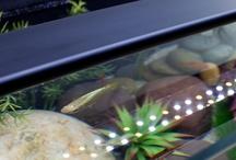 Stunning Aquariums / Amazing marine and freshwater aquariums, aquascapes and lighting ideas.