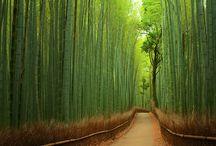 StandartPerspektif / Çevre dostu modüler yapılarımızla doğa ile savaşmıyor; onunla harmoni içinde yaşıyoruz. Panoda yer alan pinleri gördüğünüzde, doğayı neden sevip koruduğumuzu anlayabilirsiniz. Bizimkisi StandartPerspektif; gözümüzden Dünya işte böyle görünüyor.