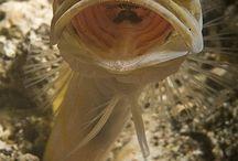 Fish @ Gazuntai.com